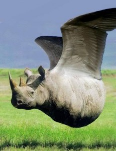 Rhino Fly